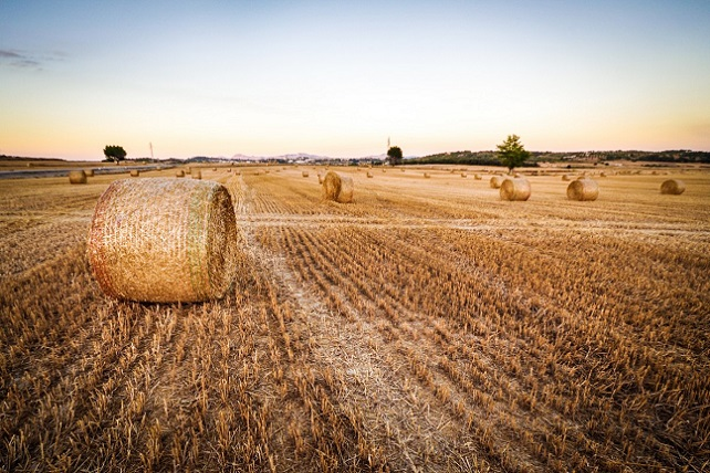 wheat_field_agriculture_harvest_hay-182528
