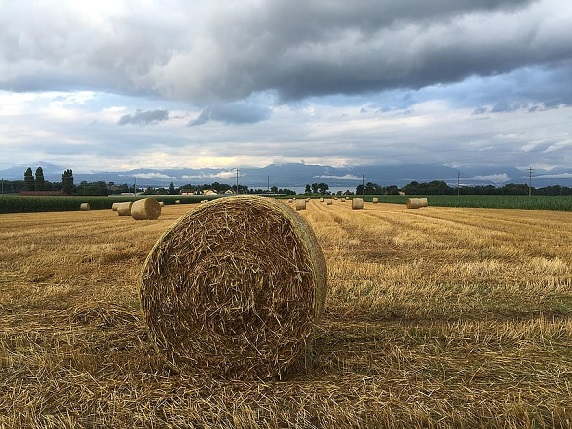 rolle-wheat-rural-agricultural-harvest-nature-agriculture-golden-bread